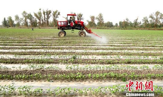 """新疆兵团""""智能农机""""引领智慧农业现代化"""