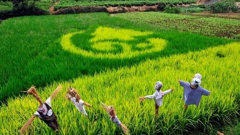 北京市开展第六批农业产业化国家重点龙头企业申报工作的通知