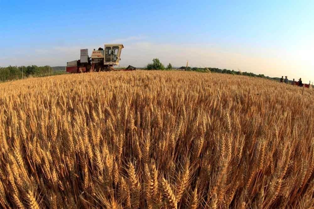 """河南:""""互联网+农业""""让麦收更高效"""