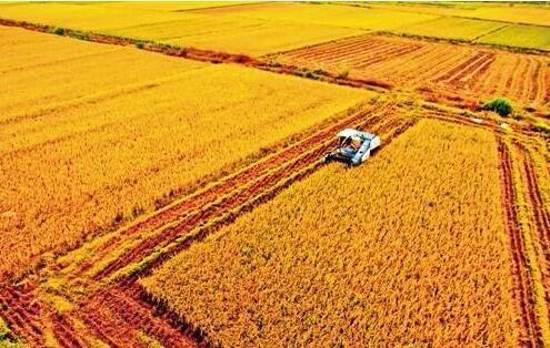 建好高标准农田筑牢粮食安全根基