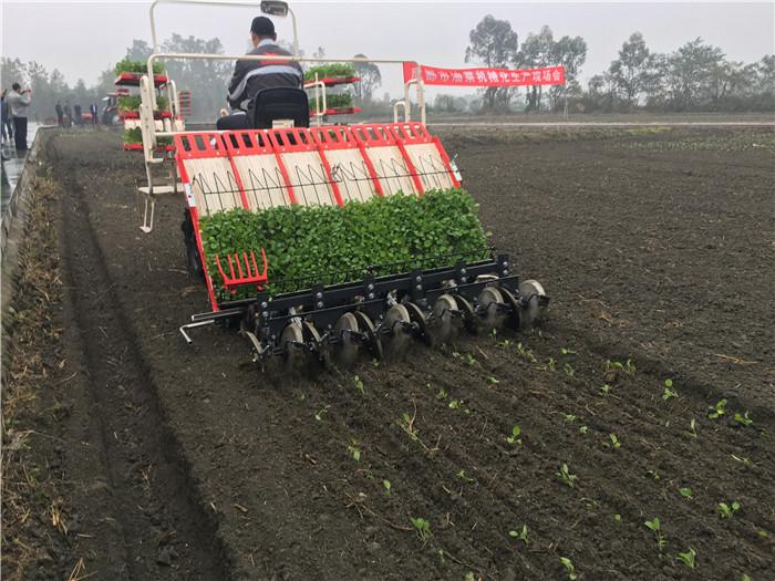 推动油菜稳产高产技术升级 洋马毯状苗移栽机引领市场