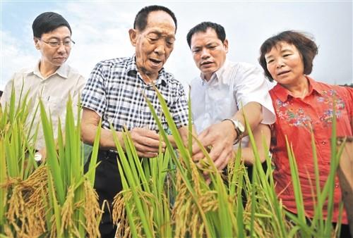 截至2018年底,全国累计推广应用14.8亿亩——  超级稻造福人类