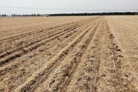 1200斤亩产,未经打捆,直接还田,马斯奇奧免耕播种机直接播种效