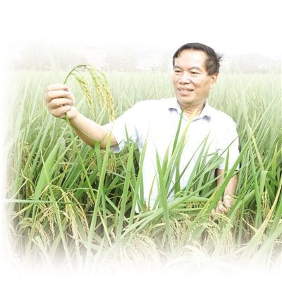 这个教授像农民:从事农业科研40多年的韦本辉