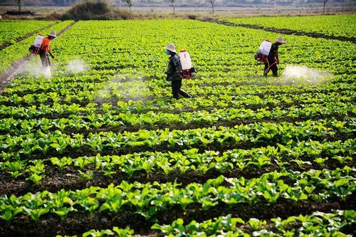 贵州省关于拨付2019年省级农业生产发展专项资金(农产品质量安全)的通知