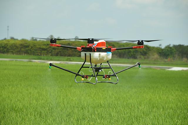 盛夏水稻病虫害高发期,该如何预防治疗?