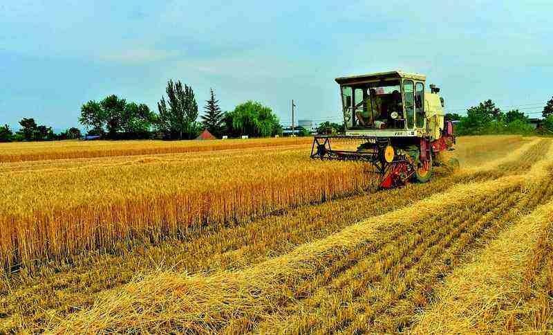 749.08亿斤 今年河南省夏粮总产量再创新高