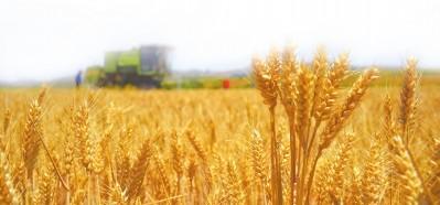 扛稳粮食安全重任 ——写在夏粮丰产丰收之际