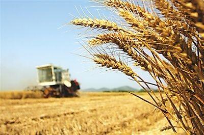 夏粮增产再显中国饭碗自信