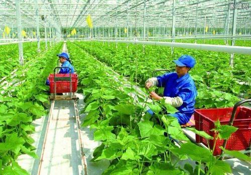 景俊海在吉林省政府工作调度会上强调:探索农村一二三产融合发展新路 促进农业增效农民增收农村繁荣