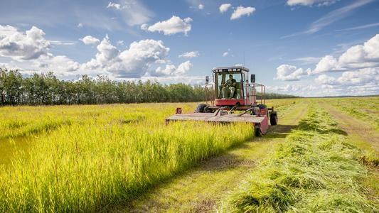 连创冬小麦高产新纪录的背后