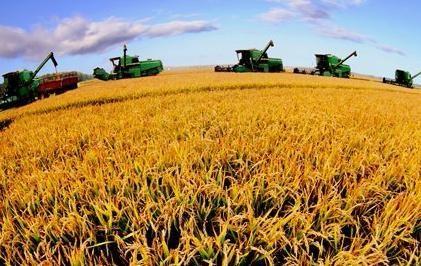 """农业供给侧改革不是""""少种粮食多种菜"""""""
