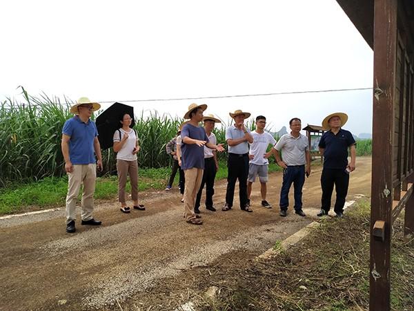 广西甘蔗生产机械化试验示范园区项目通过验收
