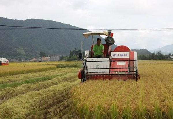 """台风""""利奇马""""对水稻生产影响及灾后恢复技术指导意见"""