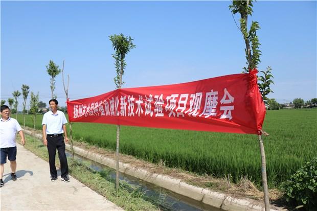 一线报道:水稻种植机械化新技术项目试验田长势喜人