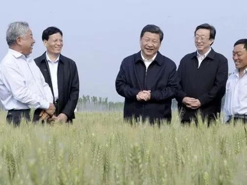 民以食为天,习近平心系中国饭碗