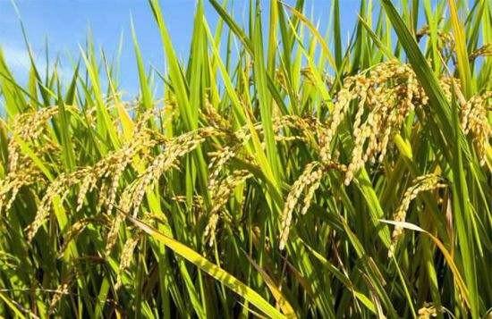 阔步迈向粮食产业强国