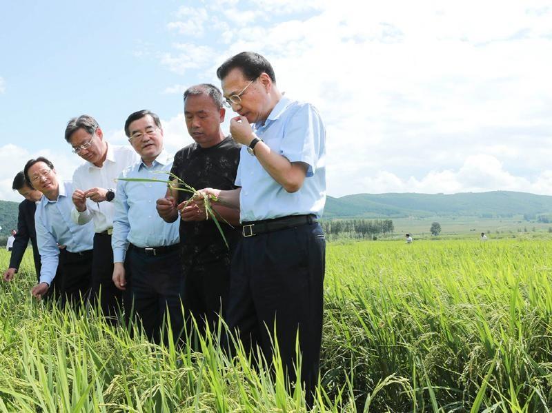"""李克强在稻田里对农民说:大米里有大学问,种大米也能种出""""高大上"""""""
