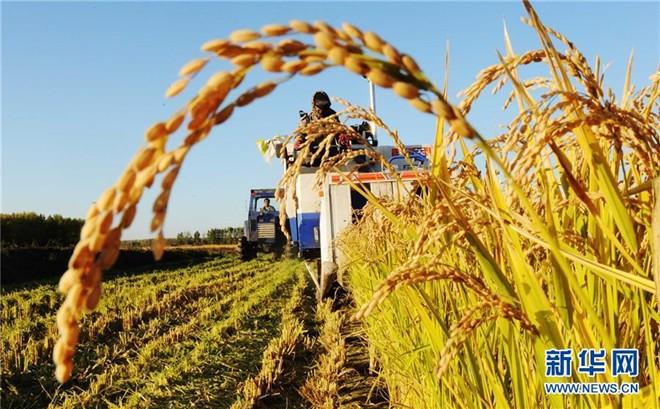 湖北省农机局关于做好全国主要农作物生产全程机械化示范县申报准备工作的通知
