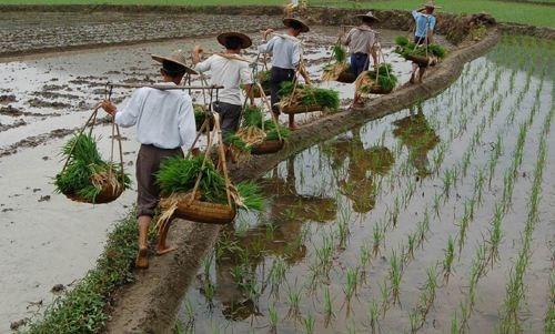 农业农村部关于完善转让土地农民基本生活保障措施