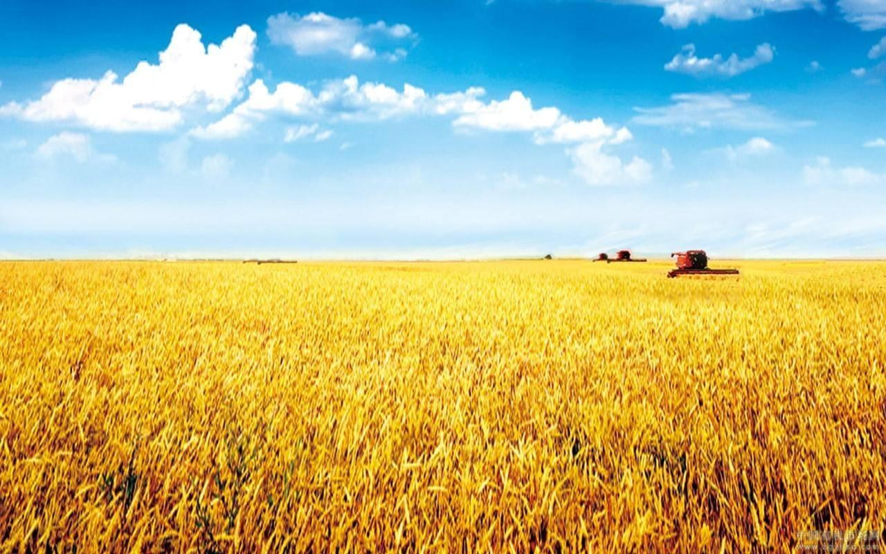 保费补贴撑大农业保险覆盖面