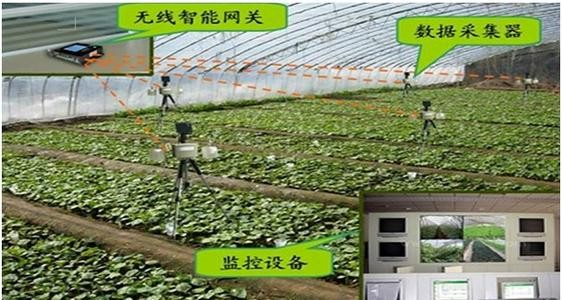 宁夏物联网技术助力农业提质增效