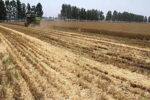 黑龙江地方标准《玉米秸秆覆盖还田免耕播种机械化作业规程》通过审定
