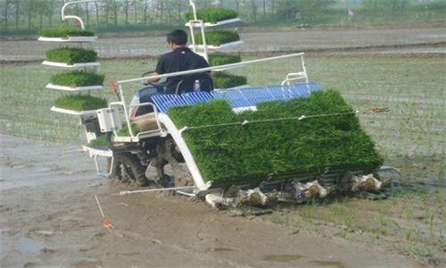 水稻机插秧同步侧深施肥技术浅析