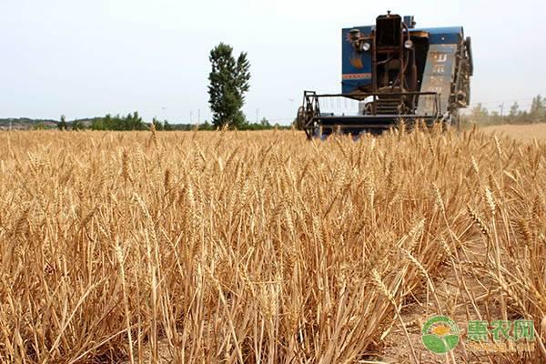 中央财政补助3.5亿,试点农业生产托管服务,具体补助标准如何?