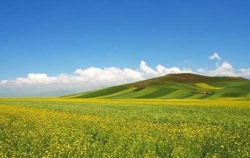 新疆启动实施农牧民补助奖励政策 2019年落实草原补助奖励总面积6.91亿亩,近30万户农牧民受益