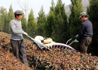 重庆市取消云南劲牛公司3CXP-1000A型多功能双人茶树修剪机的补贴资格