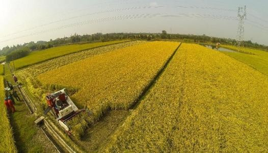 中央财政将进一步引导规范农村土地流转,促进现代农业发展