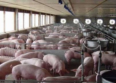 河北省关于开展生猪生产农机装备购置补贴需求专项调查的函