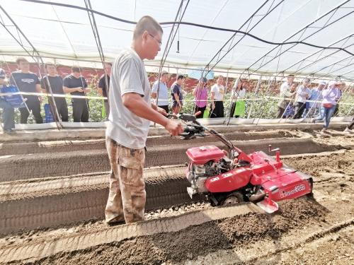 日光温室草莓起垄机研制成功