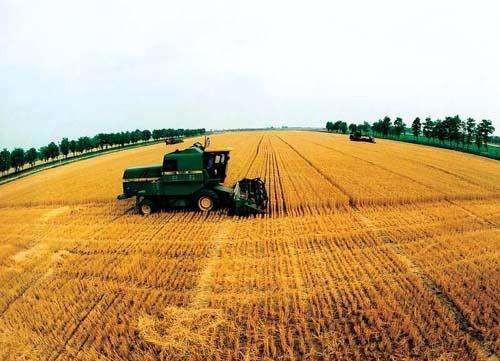 山东省小麦玉米规模化生产机器系统优化配置研究取得阶段性成果