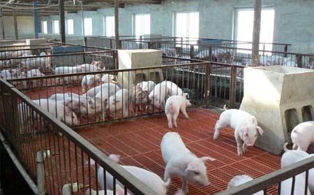 甘肃省农业农村厅关于开展生猪生产农机装备购置补贴需求专项调查的通知