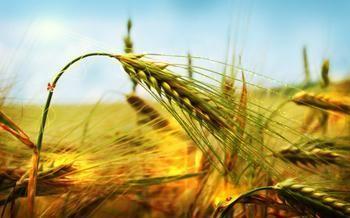 2019年秋冬季主要农作物科学施肥指导意见