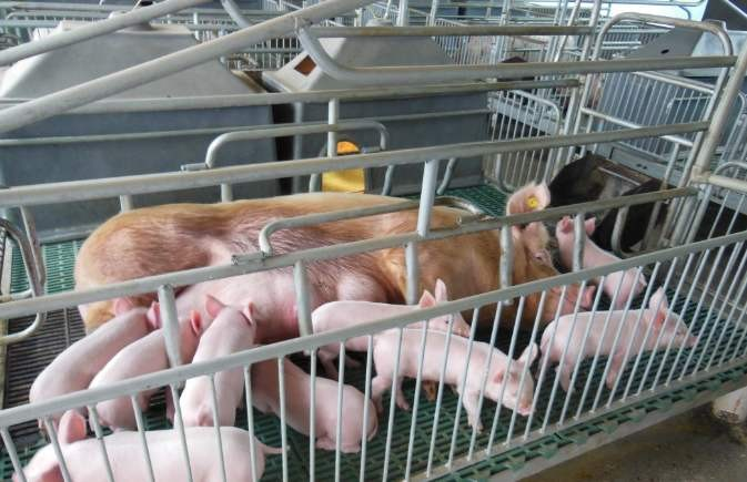 新疆兵团关于加大农机购置补贴力度支持生猪生产发展的通知