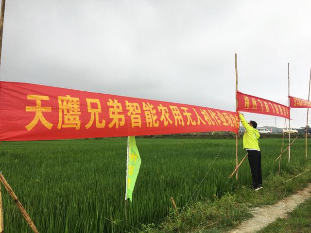 五华县:天鹰兄弟植保无人机助水稻病虫害统防统治