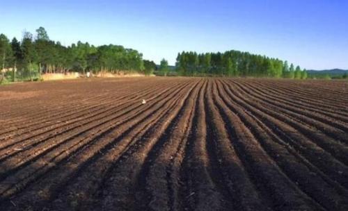 官方答复:关于进一步加强黑土地保护工作的建议