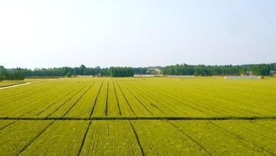官方答复:高标准农田建设建议
