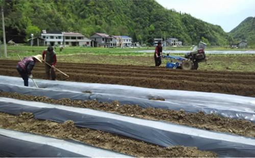 """关于""""机耕道路""""的建设,农业农村部这样答复人大代表"""