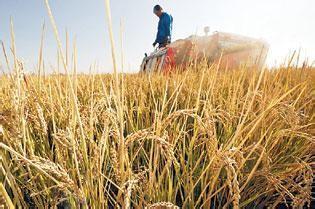 官方答复:切实从严保护基本农田确保粮食安全的建议