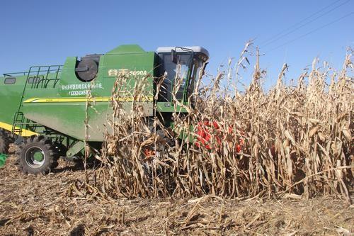 农业农村部农机化技术开发推广总站关于组织开展玉米籽粒低破碎机械化收获技术演示示范活动的函
