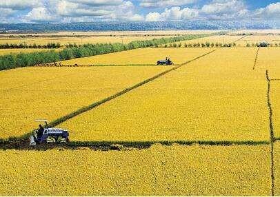 切实抓好黄河流域粮食生产和农业高质量发展