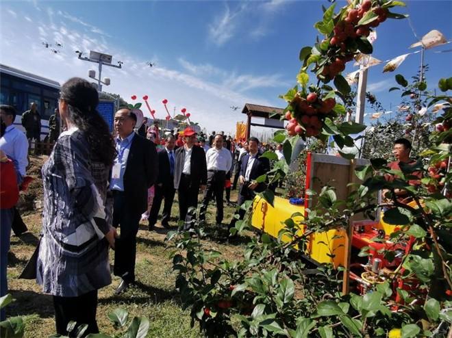 灵宝市农机局现代化果园机械在2019年中国农民丰收节暨灵宝苹果采摘季精彩展示!