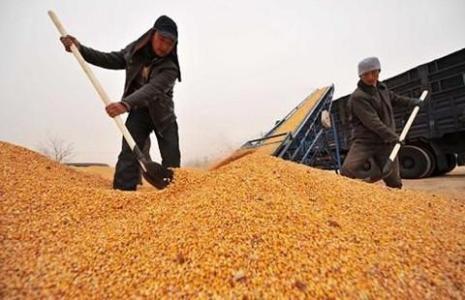 5部门关于公布2020年小麦最低收购价格的通知