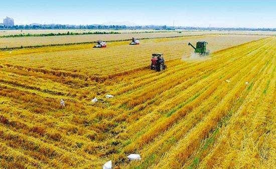 安徽省秋粮收获进度近八成