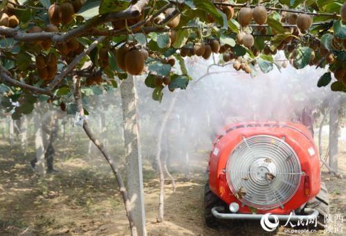 眉县猕猴桃机械化发展有喜有忧