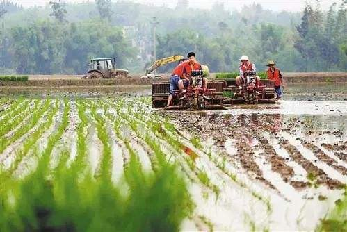 """吉林""""五大举措""""凝心聚力推进农业现代化"""